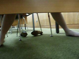 図書館で座って靴脱いで脚開いて読書中を机の下から頂きます【動画】タコ 01〜03セット販売