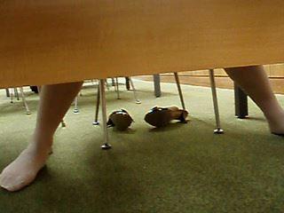 図書館で座って靴脱いで脚開いて読書中を机の下から頂きます【動画】タコ 03と02セット販売