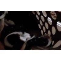 『身内観察・・〜再び〜』・・洗濯籠1