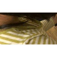 【フルHD】リアル胸チラハンターvol.1414