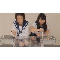 1匹数千円の輸入カエルをペチャンコにするSな2人組(期間限定半額商品)