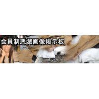 【30日間会員権】会員制悪戯画像掲示板