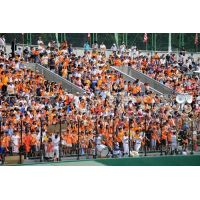 2014年高校野球 全校応援 ホットパンツ 03