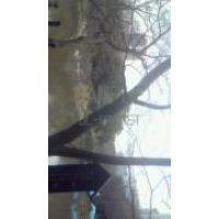 †♩♪cia ♩♪†小石川庭園