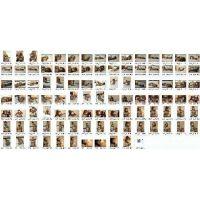 [PHOTO] 草凪純 ボンデージ写真セット 13-08